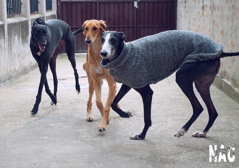 ¿Cuántos perros de caza se abandonan cada año en España?