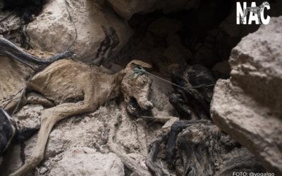 Reunion RFEC 10 medidas sobre malestar animal